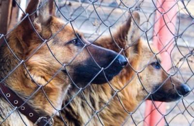 Пункты по бесплатной вакцинации домашних животных в Нагорном районе откроются осенью
