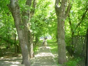 300 деревьев и 12 тысяч кустарников появятся в Южном округе