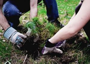Жители Южного округа выбрали деревья для озеленения своих дворов