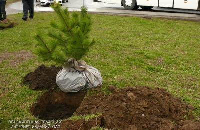 В районе высадят новые деревья и кустарники