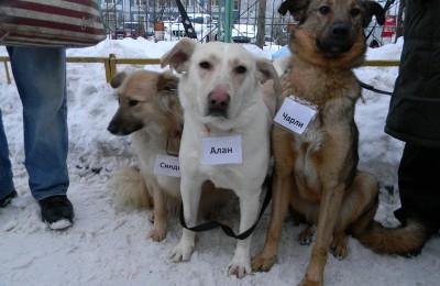 Животные в ЮАО