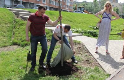 Высадка деревьев в районе